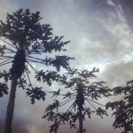Instagram - Jan. 8, 2013